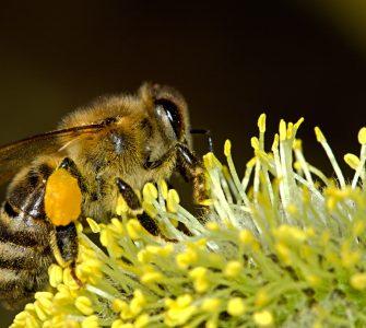 De mooiste bijenplanten voor in de tuin