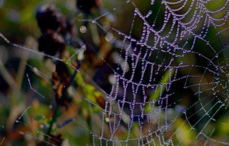 Spinnenoverlast, wat nu?
