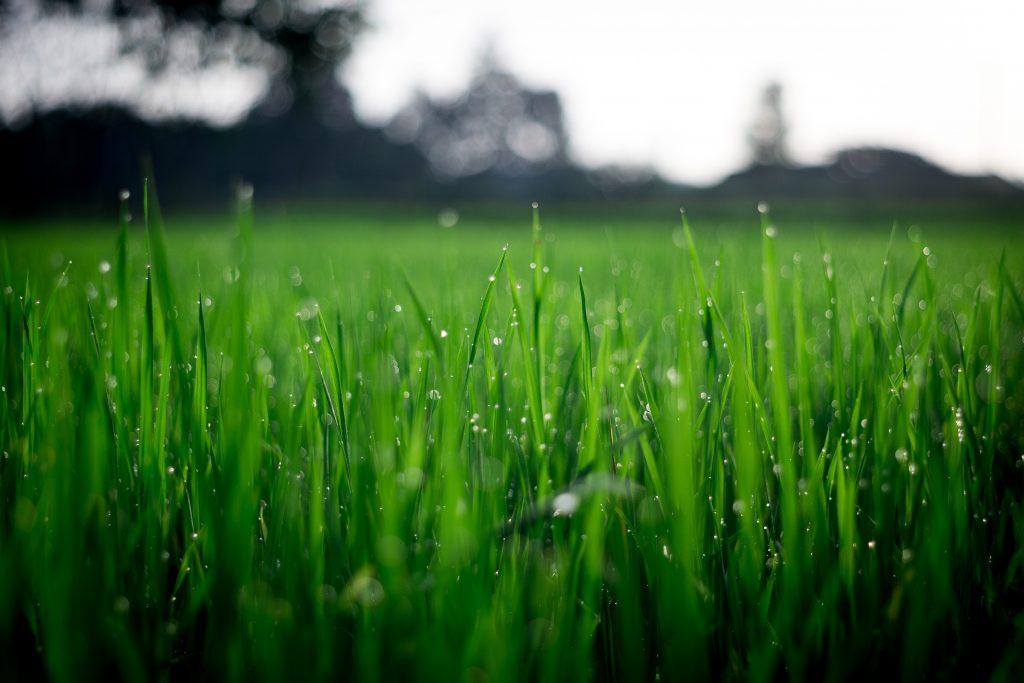 Graszoden aanleggen