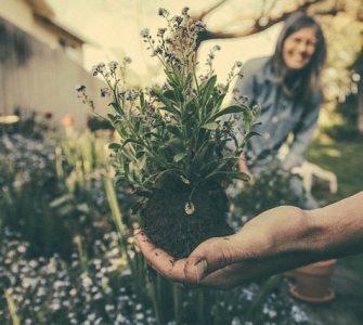 Tips voor onderhoudsarme tuin